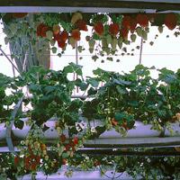 todo sobre cultivo hidropnico