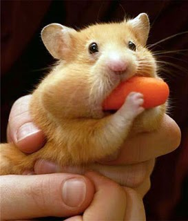 Feliz Año 2012 Hungry_hungry_hamster